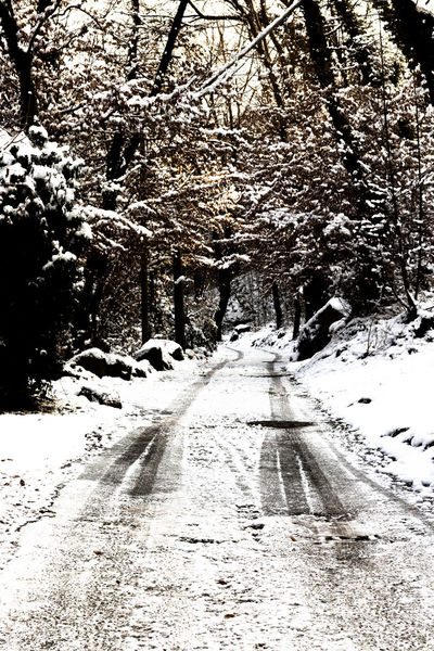 Into the wood MR7 Beauty In Nature Branch Canon Cold Temperature Day Diminishing Perspective Eos77D Nature No People Outdoors Road Scenics Sky Snow The Way Forward Tranquility Transportation Tree Vintage Winter