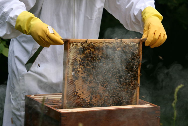 Midsection of beekeeper in protective suit examining bees on honeycomb