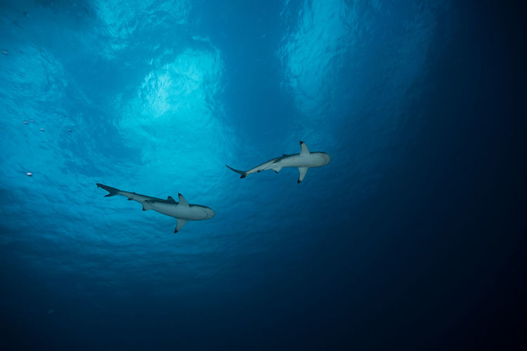 shark's hometown