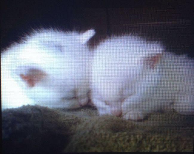 My old kitties