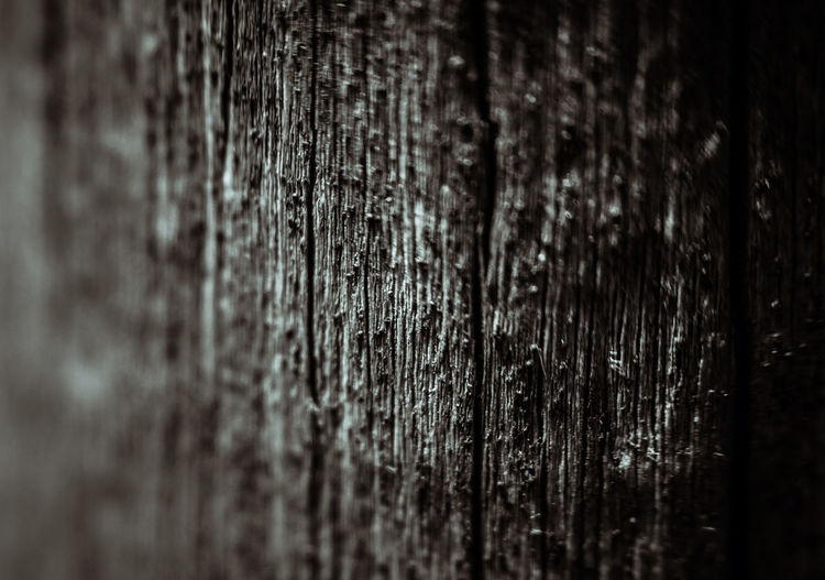 Background Backgrounds Close-up No People Objektifimden Selective Focus Textured  Wood Wood - Material Wood Background Wood Texture Wooden Perspectives On Nature