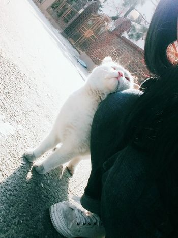 One Animal Cat Day People Cute Kitty Camera Landscape Lovely Awesome Like Good Mood :) Taking Photos Beautiful Oh Pets Dog One Person Animal Themes Lying Down Domestic Animals Real People Mammal Low Section Outdoors
