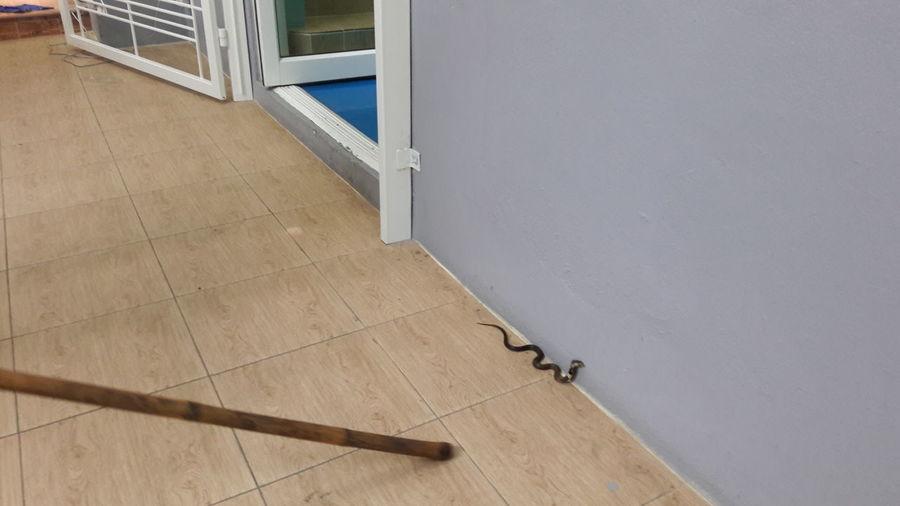 Snake Dangerous