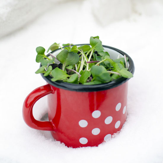 Close-up Cold Temperature Day Enamel Mug Food Food And Drink Freshness Healthy Eating Indoors  Microgreens No People Polka Dot Ready-to-eat Red Veganfoodporn Vegetable White Background