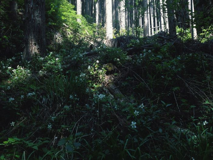 Forest Nature Tree Plant Outdoors Tree Area Beauty In Nature Green Color Flower Flowers Light