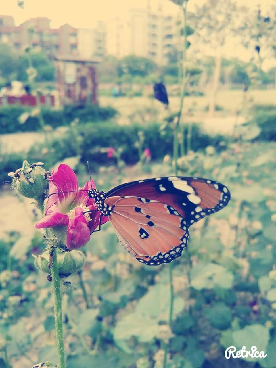 butterfly - insect, insect, focus on foreground, plant, nature, fragility, flower, butterfly, animals in the wild, animal themes, growth, beauty in nature, one animal, outdoors, close-up, no people, day, freshness, flower head