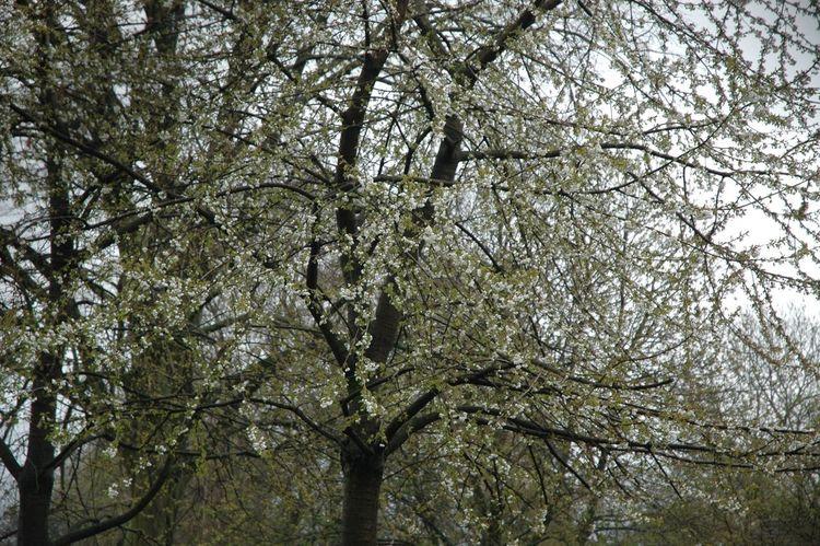 Mit Nikon D70 Spring Tree White Wohnglück