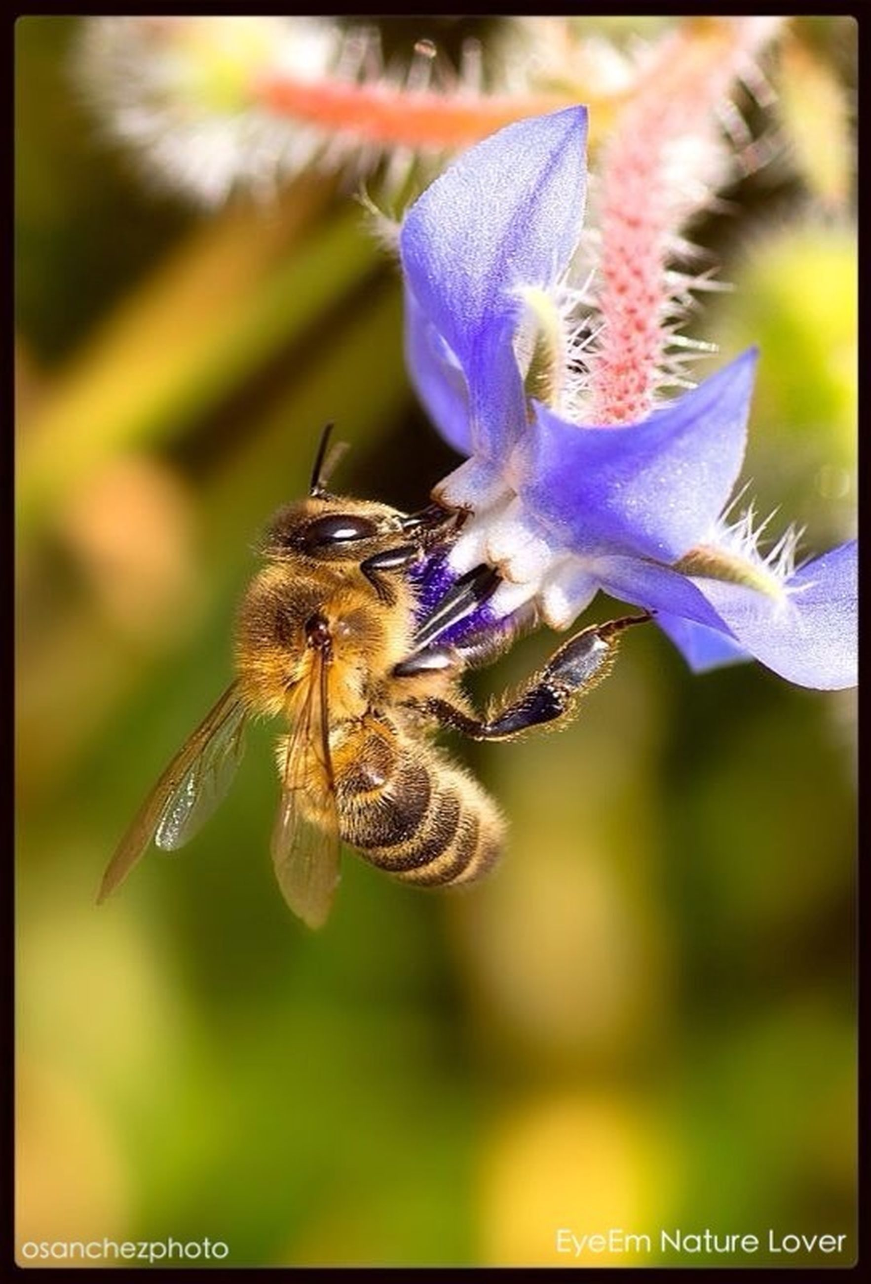 insect, animal themes, animals in the wild, one animal, wildlife, flower, pollination, bee, fragility, focus on foreground, close-up, transfer print, purple, freshness, beauty in nature, nature, symbiotic relationship, petal, growth, honey bee