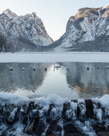 Swan Landscape Lake Frozen Mountain Reflection Animal Nature Snow Ice Water Cold Temperature Winter Scenics - Nature Beauty In Nature Tranquil Scene Mountain Range Tranquility Non-urban Scene Idyllic No People Day Snowcapped Mountain Outdoors Cold Flowing Water My Best Photo
