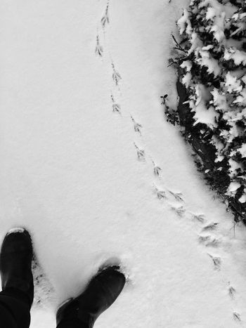 Winter Snow Standing Outdoors Cold Temperature Bird Earlybird Blackandwhite Black&white Black And White