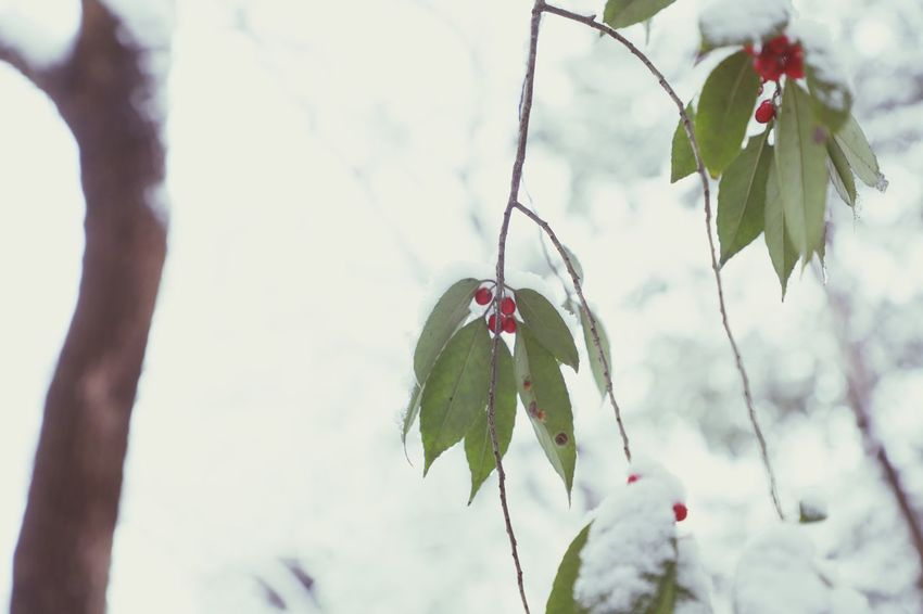 Flower Tree Red Branch Nature Love Plant