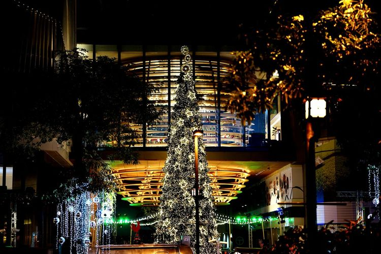 Night Illuminated Tree Built Structure Architecture No People Christmas Decoration Christmas Lights Vacations Christmas Outdoors Christmas Time Santaclaus Winter Santa Claus Decoration Christmas Party Chrismas Now Nightlife Black Background Light Effect Background New Year