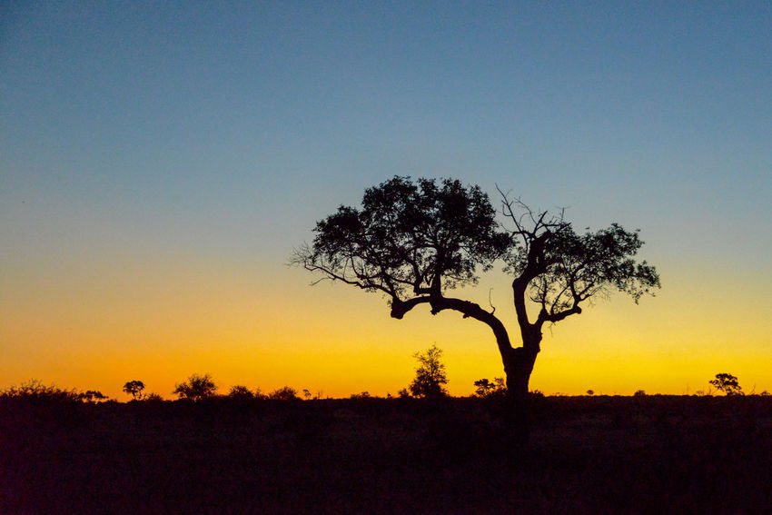 Safari in Hlane Royal National Park in Swaziland. Hlane Hlane Royal National Park National Park Swaziland  Wildlife & Nature Beauty In Nature Clear Sky Landscape Nature No People Outdoors Safari Scenics Silhouette Sunset Tranquil Scene Tranquility Tree