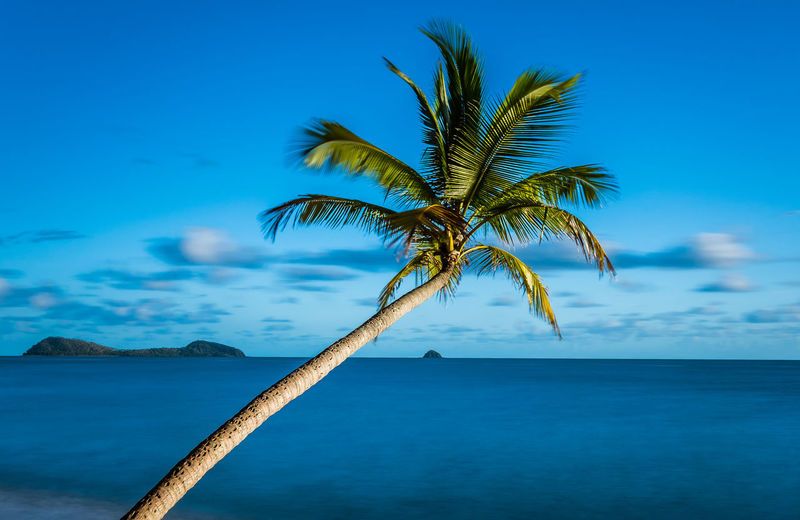 Beach Beachphotography Beauty In Nature Blue Day Horizon Over Water Landscape_Collection Nature Palm Cove Queenslandaustralia Palm Tree Palm Trees Relax Relaxation Relaxing Scenics Sea Sea And Sky Seascape Sky The Great Outdoors - 2017 EyeEm Awards Tourism Tranquil Scene Tranquility Tree Water