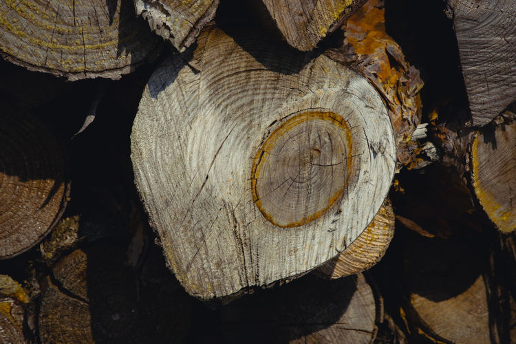 Close-up of stack of logs