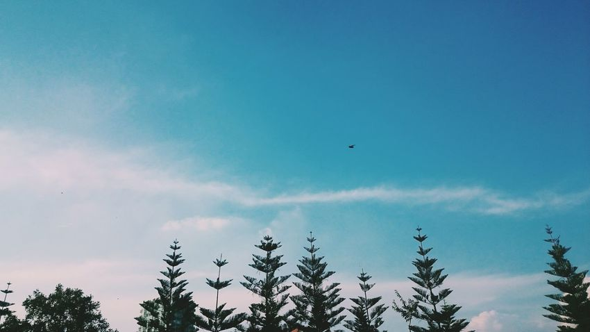 Tree Low Angle View Blue Sky Scenics Tranquility Tranquil Scene Growth Beauty In Nature Nature High Section Cloud Day Treetop Outdoors Cloud - Sky Tree Top Outline No People Non-urban Scene VSCO Vscocam