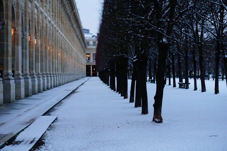Snow covered footpath amidst trees in city