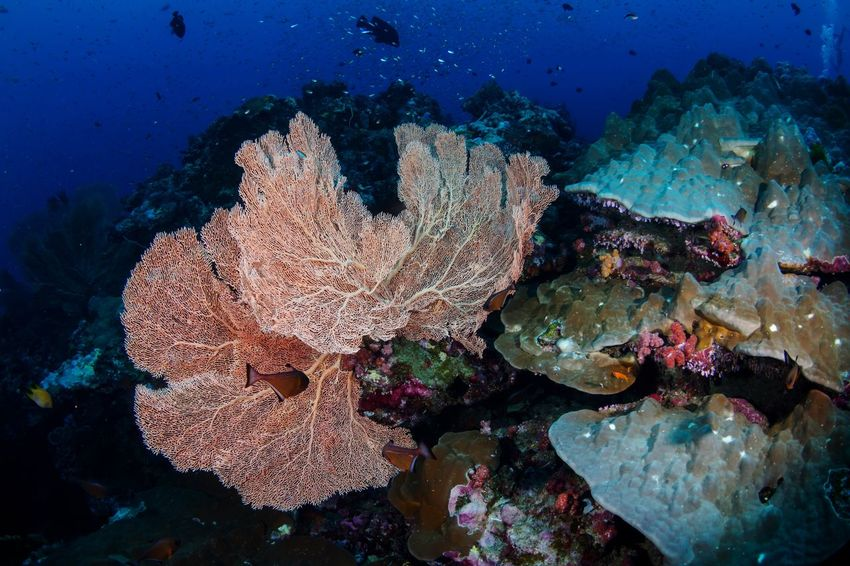 Beauty In Nature Scuba Diving SCUBA Underwater UnderSea Sea Sea Life Coral Reef Animals In The Wild Nature Fish Scuba Diving No People Multi Colored Water Outdoors Animal Themes