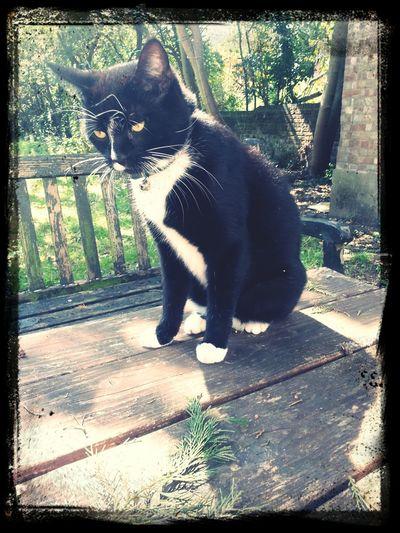 Enjoying Life Hanging Out Catsnap Shadows