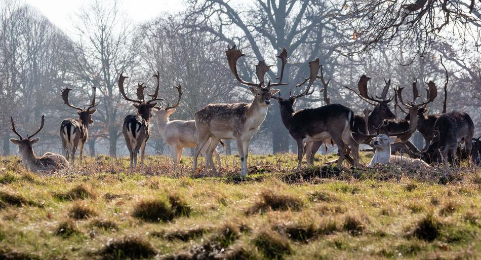 Deer Outdoors Nature Animal Themes Mammal Animal Wildlife No People Animal Herbivorous Herd Antler Vertebrate Group Of Animals