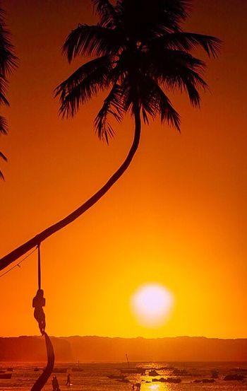 Praia da Pipa Sky Water Orange Color Sunset Sea Beauty In Nature Scenics - Nature Tree Sun Land Tranquil Scene Horizon Silhouette Beach Sunlight Horizon Over Water Nature Idyllic Tranquility