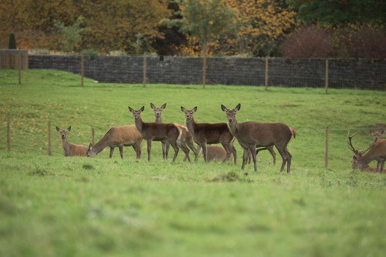 Deer on field against trees