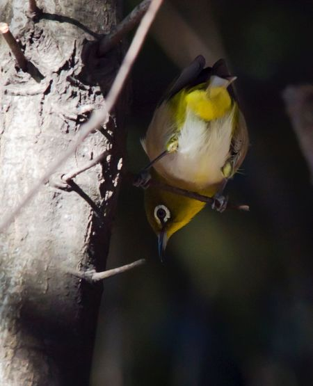 Animal Themes One Animal Animals In The Wild Bird Animal Wildlife No People Close-up Day Perching Outdoors Focus On Foreground Nature Beauty In Nature