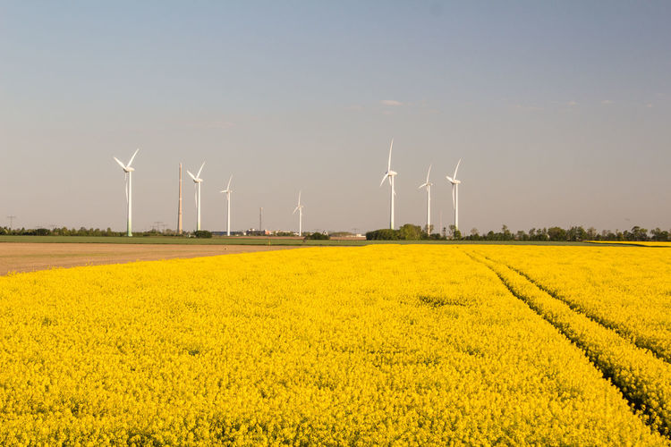 Agriculture Alternative Energy Beauty In Nature Clear Sky Day Environmental Conservation Field Flower Fuel And Power Generation Industrial Windmill Landscape Nature No People Oilseed Rape Outdoors Renewable Energy Rural Scene Scenics Sky Summer Technology Wind Power Wind Turbine Windmill Yellow