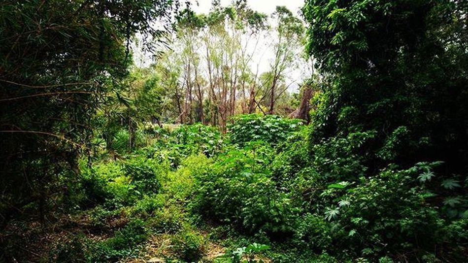 Instanature Eco Green Weekend Landscape Scape Cave Ecology Ecoturism