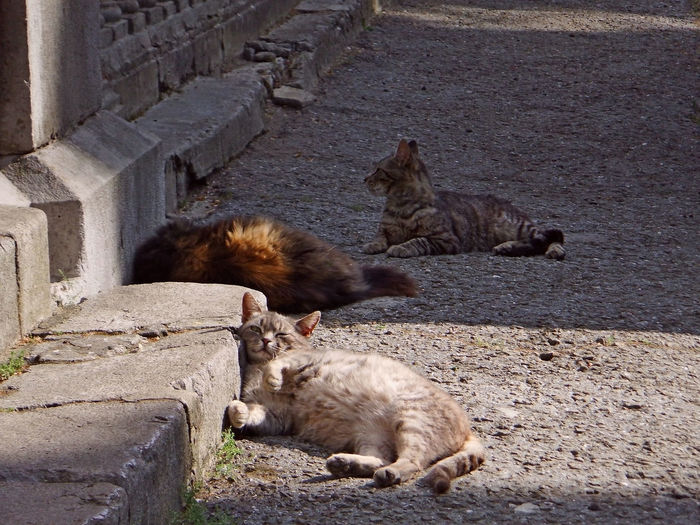 High angle view of cats on wall