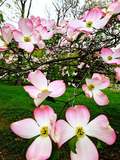 Springtime Flowers Beauty In Nature Beautiful Flower Head Flower Pink Color Petal Close-up Blooming Plant Plant Life Blossom Apple Blossom Fruit Tree Apple Tree Cherry Tree Magnolia Day Lily Cherry Blossom Pistil Orchard The Great Outdoors - 2019 EyeEm Awards