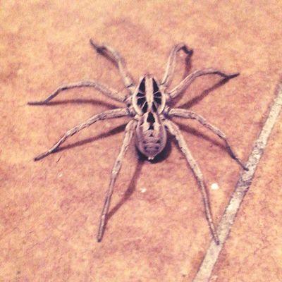 me encontré una fachera Spider Pretty Summer Arañas