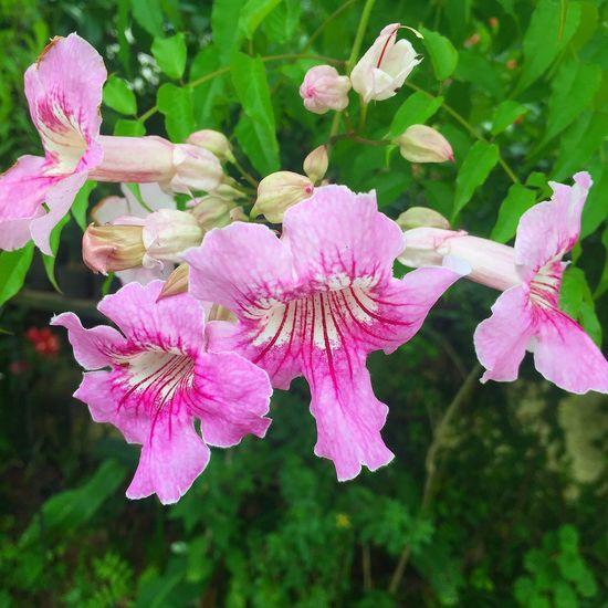 Flower pink free green