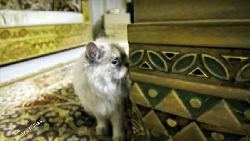 Catlover Catcatcat Cat Catoftheday