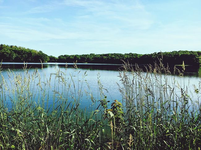 Tranquility Blue Water Nature Growth Plant Lake Outdoors Day Grass Beauty In Nature No People