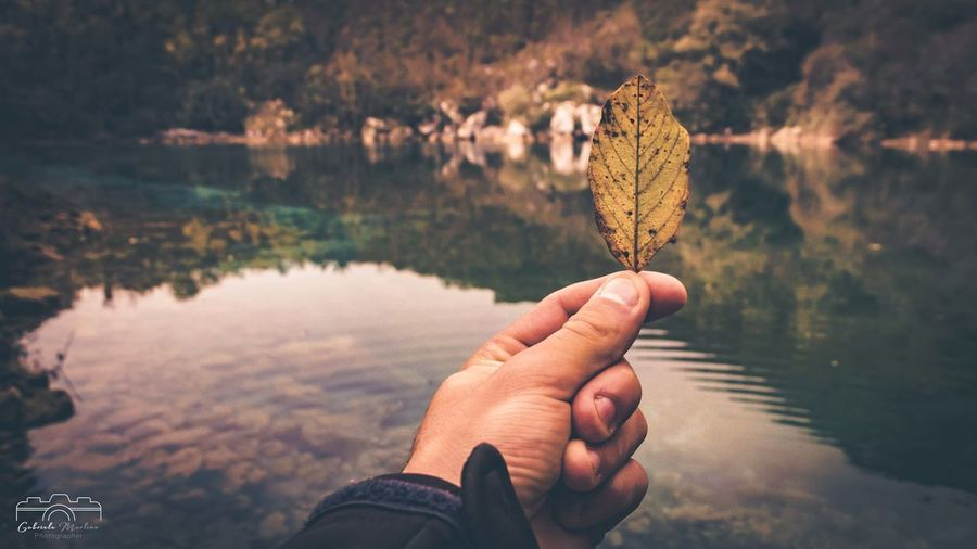 Midsection of person holding autumn leaf in lake