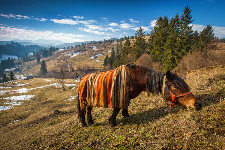 Horses covered in blankets in a cold spring morning from Brasov, Romania. Farm Field Maramures Nature Rural Animal Animal Themes Beauty Beauty In Nature Blanket Blue Sky Brown Cold Domestic Animals Horse Landscape Mammal Mountain No People One Animal Outdoor Single Snow Spring Tree