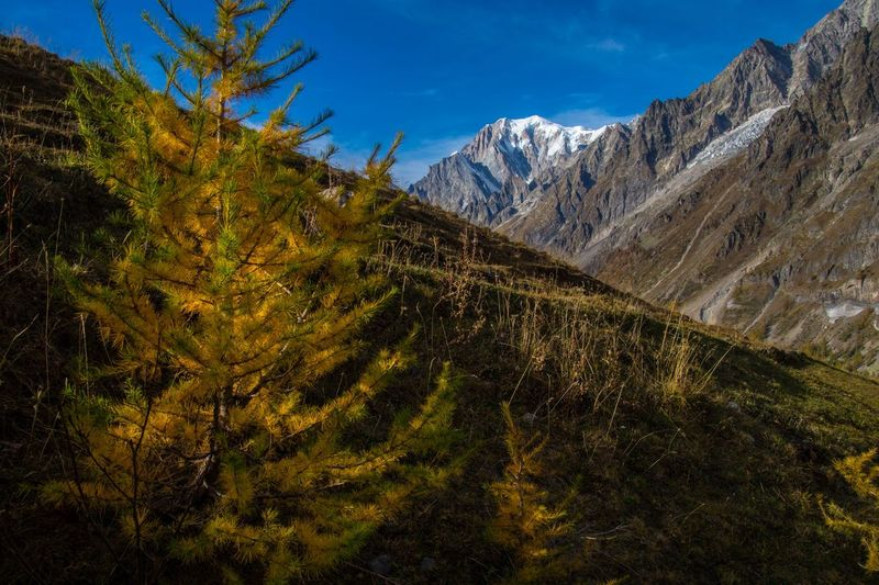 refuge bonatti,courmayeur,italy Mountain Plant Scenics - Nature Environment Tree Beauty In Nature Nature Landscape Sky Tranquil Scene Land Mountain Range No People Tranquility Day Non-urban Scene Forest Green Color Outdoors Autumn Mountain Peak Snowcapped Mountain