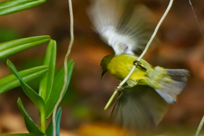 Nature Close-up Agriculture Animal Wildlife Plant Bird No People Outdoors Multi Colored Growth Day Flying Yellow Vented Bulbul
