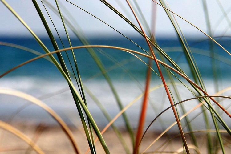Dancing Dunes on a Florida Beach Beach Beach Photography Beauty In Nature Close-up Day EyeEm EyeEm Best Shots EyeEm Best Shots - Nature EyeEm Gallery EyeEm Nature Lover EyeEmBestPics Eyeemphotography Growth Nature No People Outdoors Plant Sky Timothy Grass