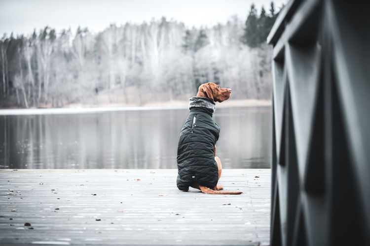 Rear view of dog sitting by lake during winter