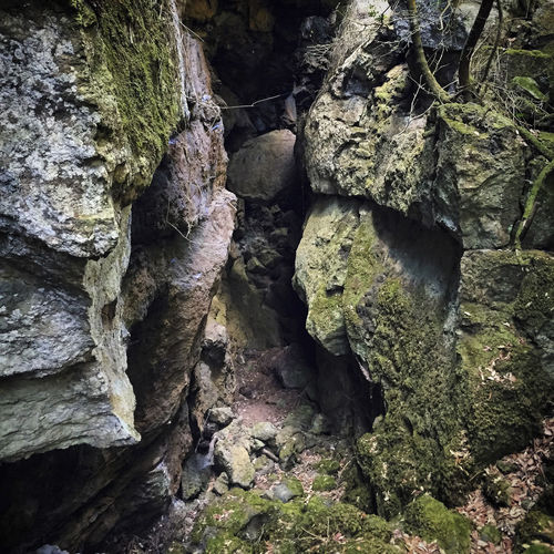 Close-up of rocks in forest
