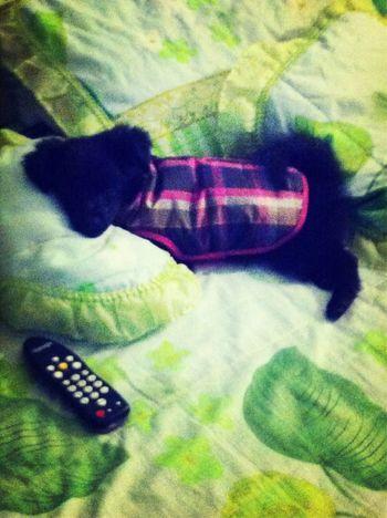 My Doggy <3