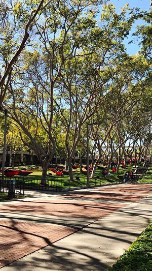 CSULB Hammock Oykosphotos Oykossstravel Aynaphotography Trees California Daily Life Long Beach