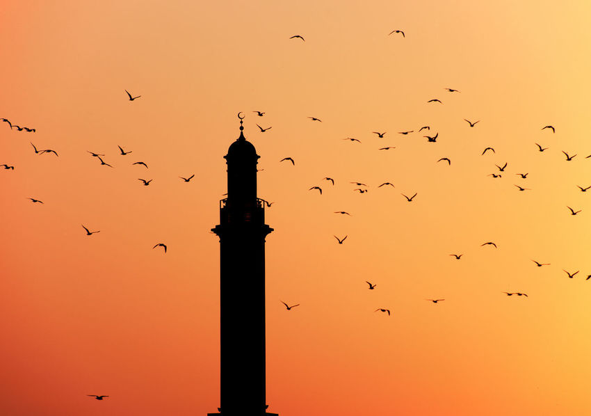 Surrounded by seagulls Bird Dubai Creek Dubai Deira Dubai Sunset Flock Of Birds Flying Minaret Mosque Orange Color Seagull Seagulls Sky Sunset Sunset Of Dubai Travel Destinations