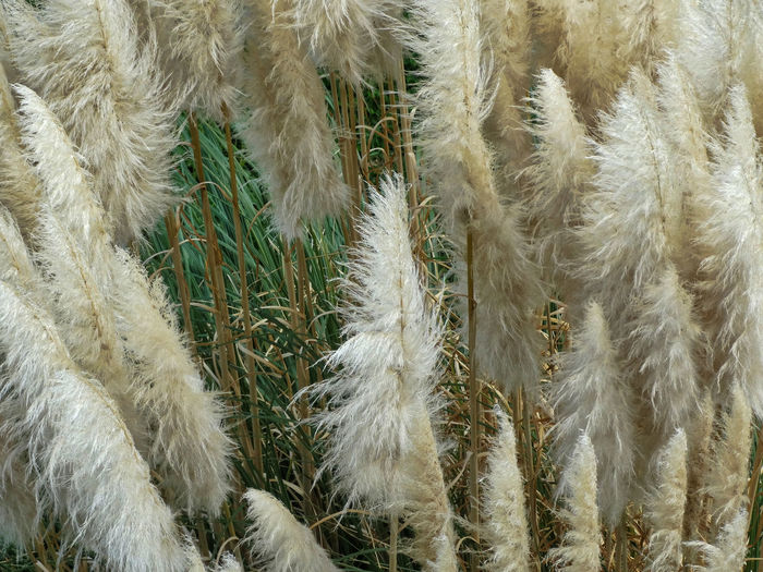 Tall grass. Fields Field Grassy Field Long Grass Beauty In Nature Nature_collection Fluffy Grassy Area Grassy Grass Flower Flowers Plants Fern Domestic Hair Softness Plant Nature Day Backgrounds Close-up No People Full Frame