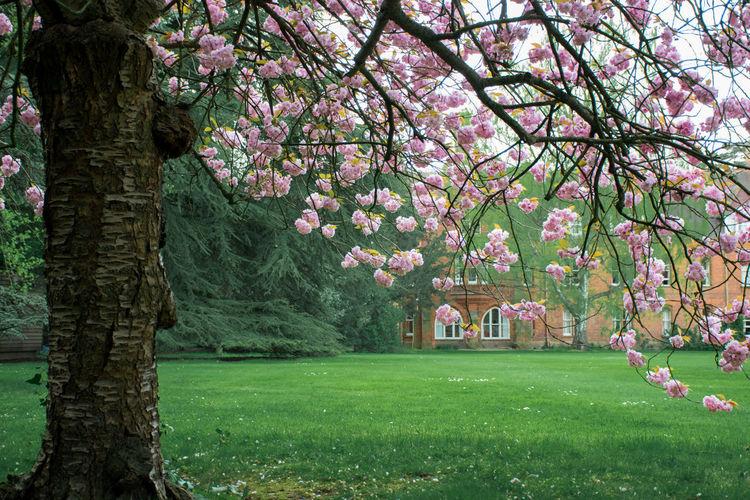 Pink flowers growing on tree trunk