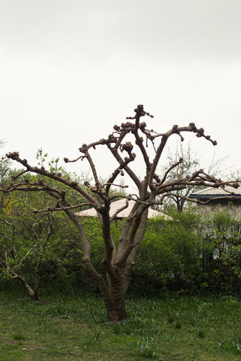 Kahl. Nature Outdoors Tree No People Growth Day Low Angle View Beauty In Nature Sky Exploring Nature City