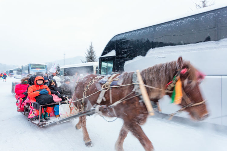 Horse cart in snow