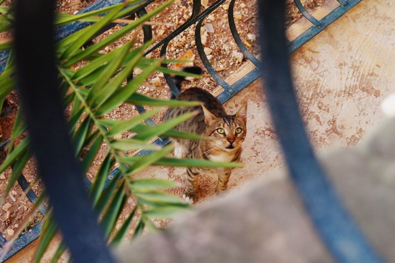 High Angle View Of Cat Seen From Balcony